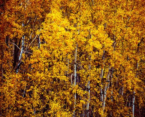 Autumn Grovesm