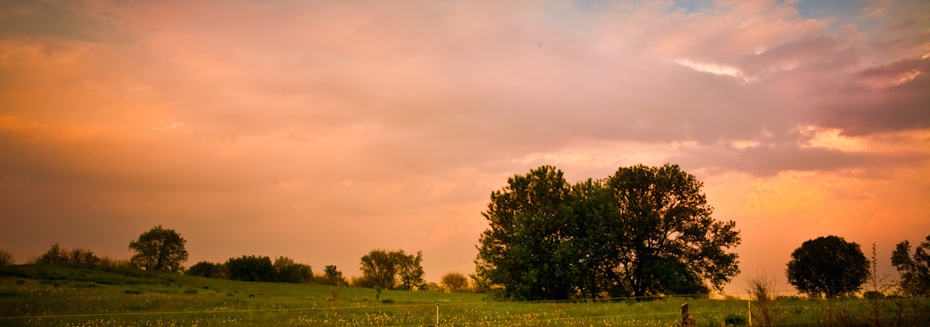 trees-and-field