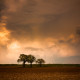 trees-storm-clouds