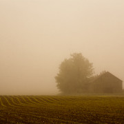 fog-and-field2