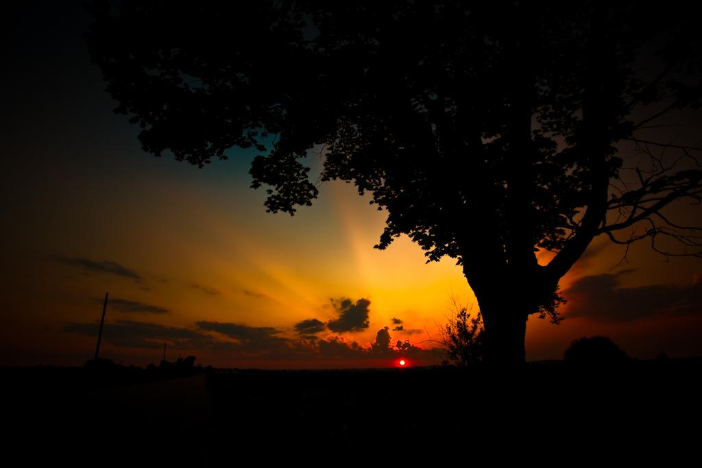 beneath-the-crowning-sun