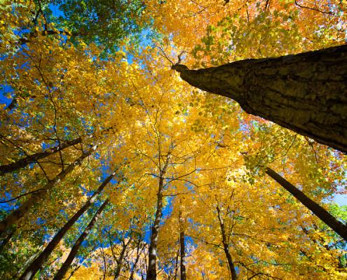 AutumnShadesm