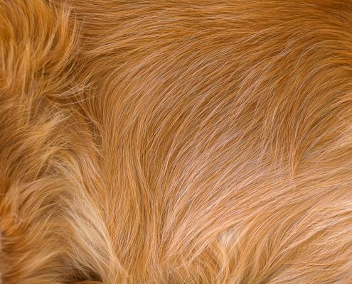 4-365 Fur small