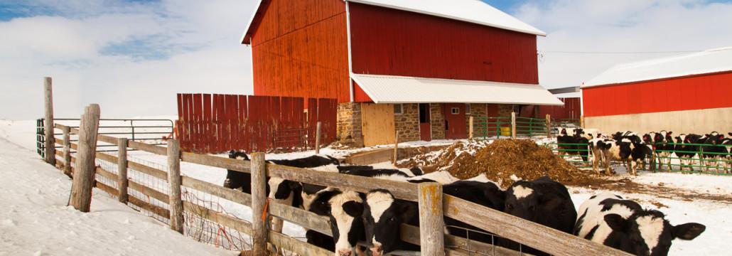 82-365 - Down on the Farm